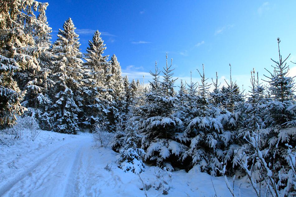 Vinterbild med blå himmel