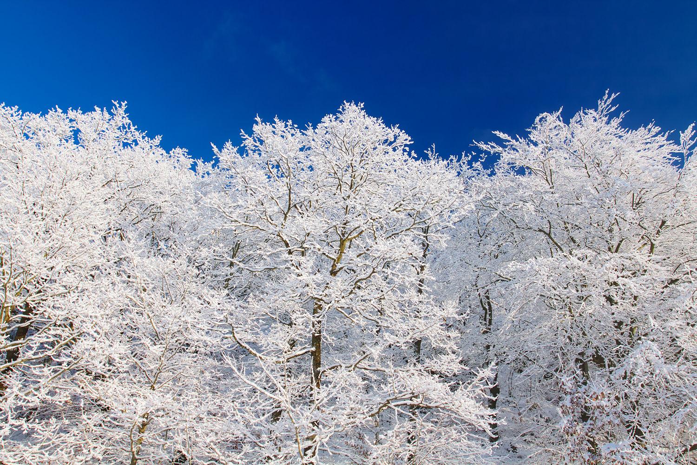 Vinterbild i Skåne