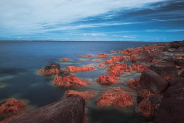 Tång och hav i infrarött ljus