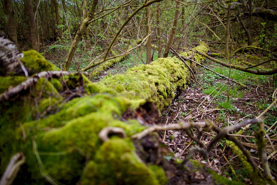 Rönneholm har lämnats åt sitt öde och naturen har sin gång där.
