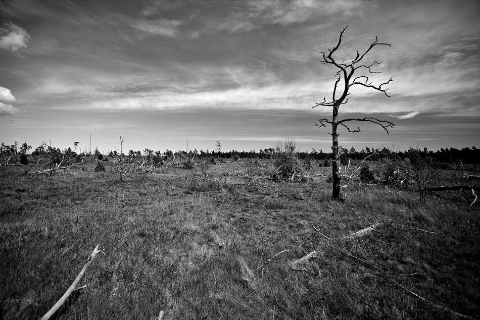 skogsbrand_MG_8623