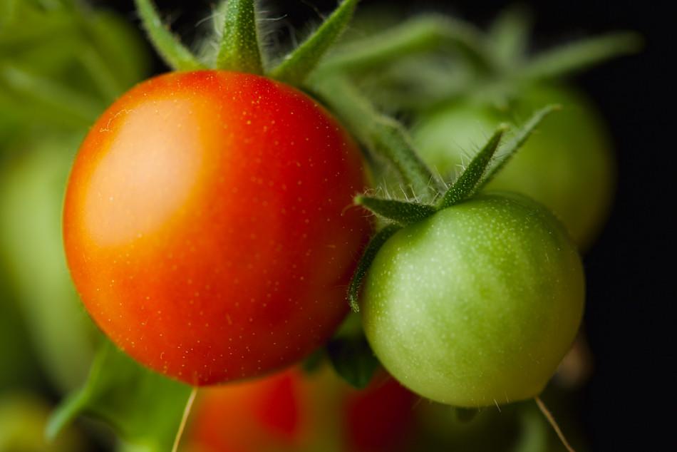tomater-fokuserade_mg_8617